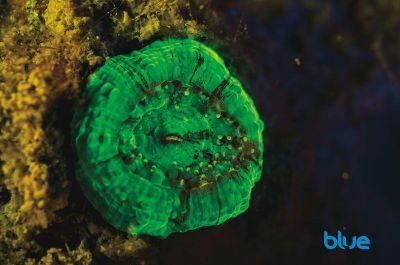 fluorescence-solomon-baksh-e