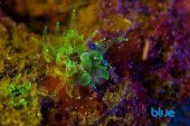 fluorescence-solomon-baksh-g